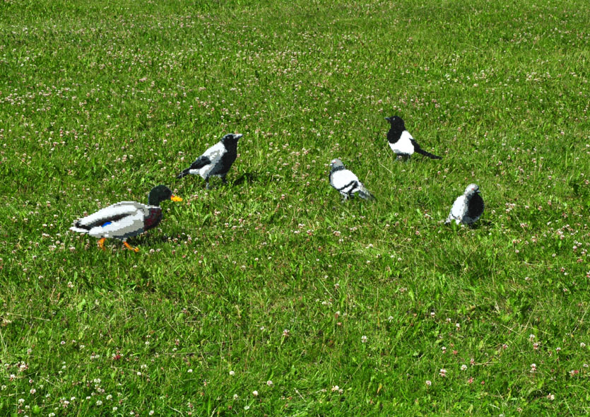 Fem fåglar