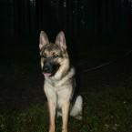hund3